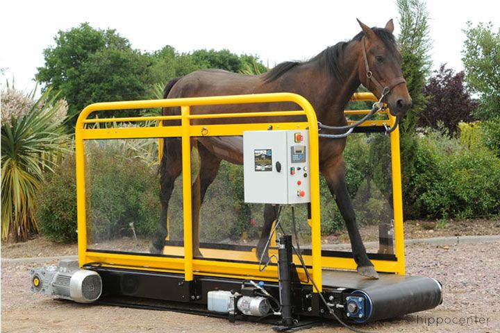 Tapis roulant pour chevaux Hippotrainer +