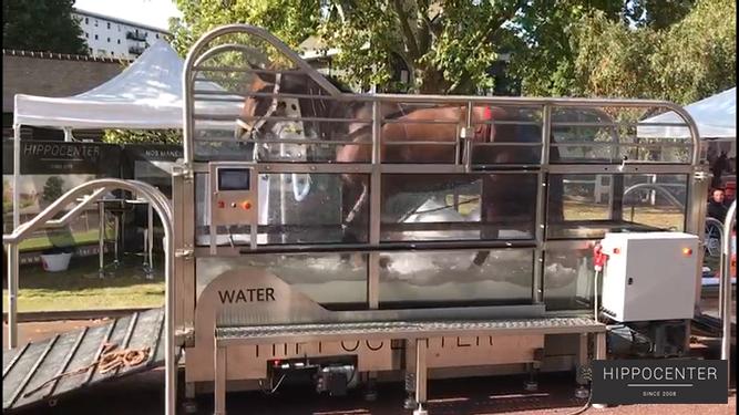 Tapis roulant aquatique Protainer Water pour balnéothérapie équine - Hippocenter
